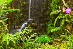 Plantas e cachoeira Fotos de Stock