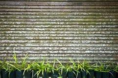 Plantas e cerca Foto de Stock Royalty Free
