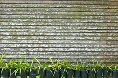 Plantas e cerca Imagem de Stock Royalty Free