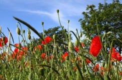 Plantas e flores Fotografia de Stock Royalty Free