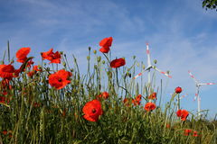 Plantas e flores Fotos de Stock