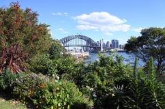 Plantas e flores das flores no tempo de mola contra Sydney Skyline foto de stock