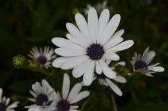 Plantas e flores de Costa Vicentina Natural Park, Portugal do sudoeste Foto de Stock Royalty Free