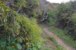 Plantas e flores de Costa Vicentina Natural Park, Portugal do sudoeste Imagens de Stock