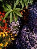 plantas e flores de jardim Foto de Stock Royalty Free