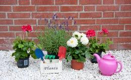Plantas e flores de jardim do verão Foto de Stock