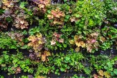 Plantas e flores em uns potenciômetros para a venda no centro de jardim ou no berçário da planta fotos de stock