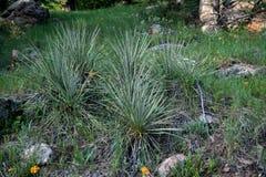 Plantas e flores nas montanhas de rochoso T fotos de stock