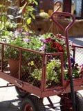 Plantas e flores no Garden Center Fotos de Stock Royalty Free