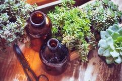 Plantas e garrafas da casa Fotos de Stock Royalty Free