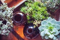 Plantas e garrafas da casa Imagens de Stock Royalty Free