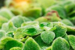Plantas e gotas nas folhas Foto de Stock Royalty Free