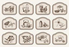 Plantas e hierbas en medicina popular Imágenes de archivo libres de regalías