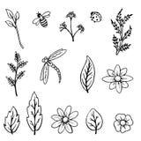 Plantas e insectos Elementos para el dise?o stock de ilustración