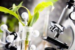 Plantas e laboratório Foto de Stock