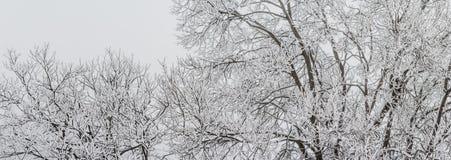 Plantas e neve Fotos de Stock