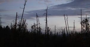 Plantas e ramos secos na noite contra o céu filme