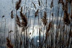 Plantas e reflexão do céu e do sol na água azul foto de stock
