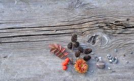Plantas e seixos na placa idosa Imagem de Stock