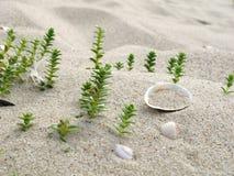 Plantas e Shells1 Foto de Stock Royalty Free