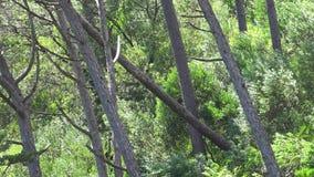 Plantas e vento das árvores filme