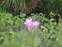Plantas em Cuba na primavera Recurso cubano imagens de stock