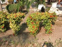 Plantas em Cuba na primavera Recurso cubano foto de stock