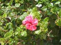 Plantas em Cuba na primavera Recurso cubano fotografia de stock