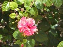 Plantas em Cuba na primavera Recurso cubano imagens de stock royalty free