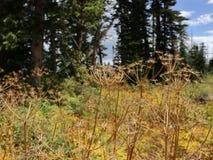 Plantas em Dixie Forest! foto de stock