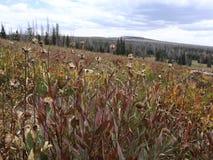 Plantas em Dixie Forest! imagens de stock