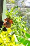 Plantas em pasta Fotografia de Stock