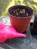 Plantas em pasta com a lata molhando do elefante Foto de Stock Royalty Free