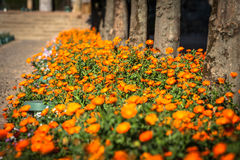Plantas em pasta e flores nas ruas de Córdova, Espanha imagens de stock