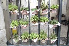Plantas em pasta em uma rua Imagens de Stock