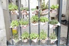 Plantas em pasta em uma rua Foto de Stock