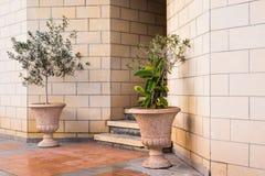 Plantas em pasta verdes na frente da entrada da construção Foto de Stock Royalty Free