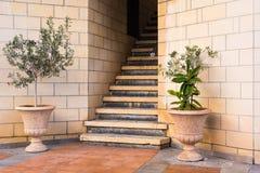 Plantas em pasta verdes na frente da entrada da construção Fotos de Stock Royalty Free