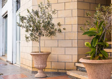 Plantas em pasta verdes na frente da entrada da construção Fotografia de Stock