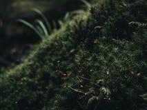 Plantas em um ambiente temperamental da natureza Fotografia de Stock