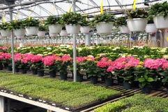 Plantas em um berçário Foto de Stock Royalty Free
