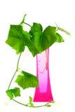 Plantas em um vaso cor-de-rosa isolado no backgroung branco Fotos de Stock Royalty Free