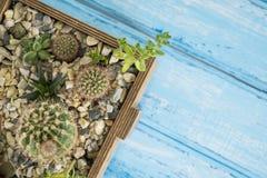 Plantas em uma caixa de madeira em um fundo azul Imagens de Stock Royalty Free