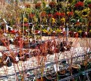 Plantas em uma loja da planta fotografia de stock