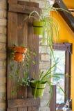 Plantas em uns potenciômetros Fotos de Stock