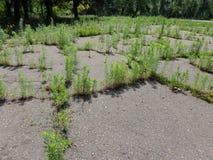 Plantas en camino Fotografía de archivo