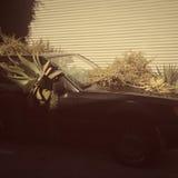 Plantas en coche Imagenes de archivo