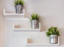 Plantas en conserva de plata en la pared blanca Imagenes de archivo