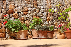 Plantas en conserva delante de una pared de piedra Fotografía de archivo