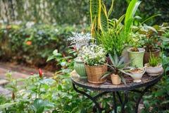 Plantas en conserva en el jardín Imagenes de archivo